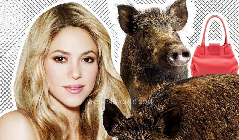 Chiếc túi của Shakira đã tan tành với hai chú lợn